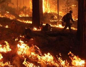 A firefighter walks through a burn operation on the southern flank of the Rim Fire near Yosemite National Park.