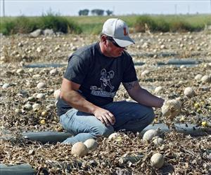 In this Sept. 28, 2011, file photo, co-owner Eric Jensen examines cantaloupe on Jensen Farms near Holly, Colo.