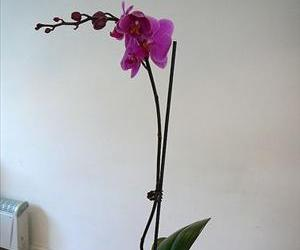 A $5 orchid?