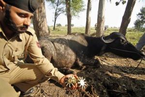 An Indian policeman shows mortar shells recovered near the frontier.