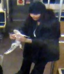 This security camera image provided by the Chicago Transit Authority on Wednesday, Nov. 13, 2013 shows a woman with a two-foot-long alligator aboard a CTA Blue Line train early in the morning of Nov. 1, 2013 in Chicago.