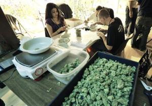 Getting ready for recreational marijuana sales in Denver.