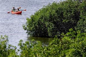 A couple floats in a kayak among the Mangrove trees June 28, 2007 at the Weedon Island Preserve in St. Petersburg, Fla.