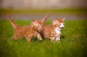 Stock image of non-imprisoned kittens.