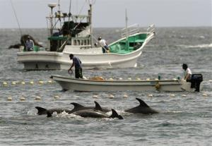 Fishermen drive bottlenose dolphins into a net during the 2010 hunt off Taiji, Wakayama Prefecture, western Japan