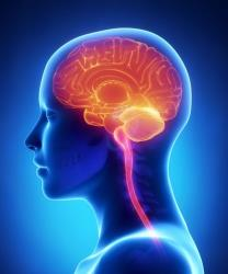 Scientists have located a new part of the brain.