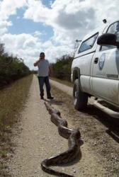 The snake was bagged by Bobby Hill, a python control agent for the South Florida Water Management District.