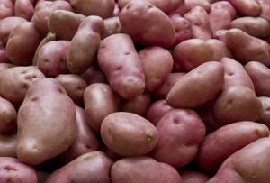 File photo of Desiree potatoes.
