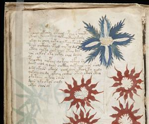 A page of the Voynich manuscript.