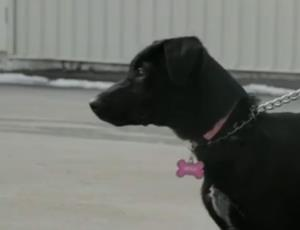 A screen grab from video of the dog, Mya.