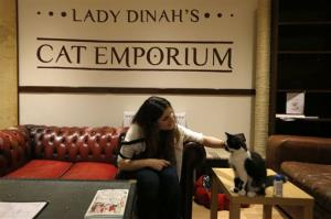 A visitor strokes a cat in the newly opened Lady Dinah's Cat Emporium in London.