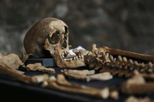 In this Wednesday, March 26, 2014 photo, one of 25 skeletons found in central London and thought to be from a cemetery for victims of the bubonic plague that ravaged Europe in the 14th century.