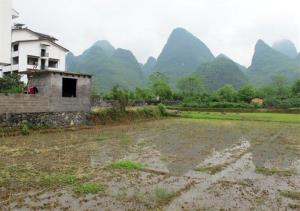 This April 18, 2012 photo shows a rice farm in Yangshaou, China.