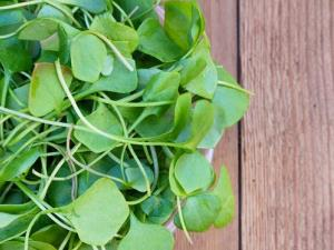 Eat your watercress, say researchers.