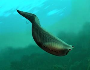 This undated artist rendering provided by the journal Nature shows a depiction of the Metaspriggina.