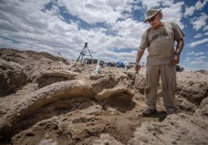 Paleontologist Gary Morgan stands Thursday, June 12, 2014, over a the fossil of a stegomastodon skull discovered in a remote area of Elephant Butte State Park, NM.