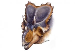 Artist's illustration of the Mercuriceratops gemini.