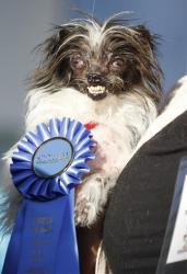 Peanut, a 2-year-old mutt is held by Holly Chandler after winning the World's Ugliest Dog Contest at the Sonoma-Marin Fair.