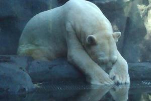 Arturo in his enclosure.