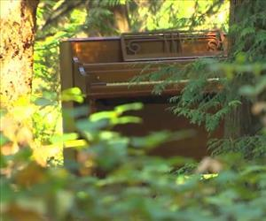 The piano was hauled into the woods after it was deemed beyond repair.