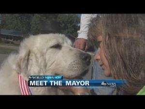 Duke the dog is the newly elected mayor of a Minnesota town.
