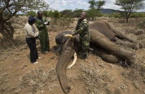 A member of a veterinary team shouts to others to clear the area as they prepare to revive a tranquilized wild elephant during an anti-poaching elephant-collaring operation.