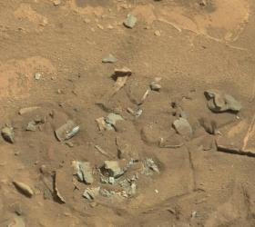 A bone-like rock is seen on the surface of Mars in this photo snapped by NASA's Curiosity rover.