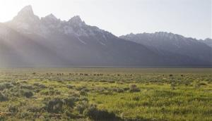 File photo of a bison grazing in Grand Teton National Park, Wyoming.