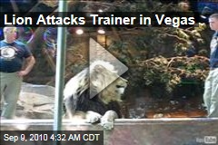 MGM Lion Attacks Trainer