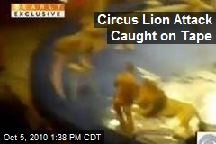 Circus Lion Attack Caught on Tape