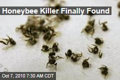 Honeybee Killer Finally Found