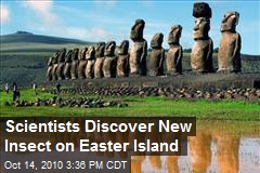 Scientists Discover New Insect on Easter Island