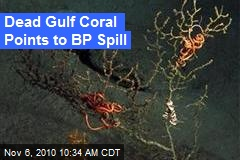 Dead Gulf Coral Points to BP Spill