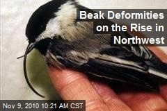 Beak Deformities on the Rise in Northwest