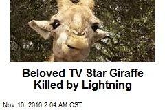 Beloved TV Star Giraffe Killed by Lightning
