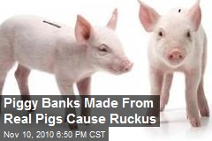 Piggy Banks Made From Real Pigs Cause Ruckus