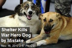 Shelter Kills War Hero Dog by Mistake