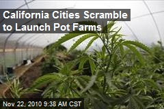 California Cities Scramble to Launch Pot Farms