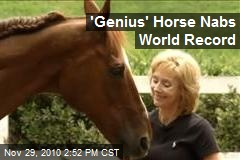 'Genius' Horse Nabs World Record