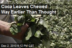 Coca Leaves Chewed Way Earlier Than Thought