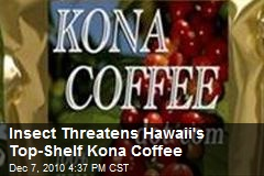 Insect Threatens Hawaii's Top-Shelf Kona Coffee