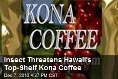 Insect Threatens Hawaii's Top-Shelf Kona Coffee