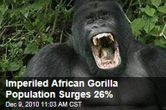 Central Africa's Imperiled Gorillas Surge 26%