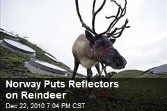 Reindeers with reflectors to stop car crashes.