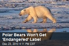 Polar Bears Won't Get 'Endangered' Label