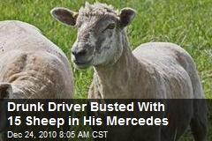 Drunk Driver Busted With 15 Sheep in His Mercedes