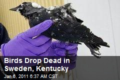 Birds Drop Dead in Sweden, Kentucky