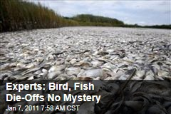 Mass Wildlife Die-Offs No Mystery, Experts Say
