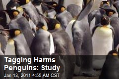 Tagging Hurts Penguins: Study