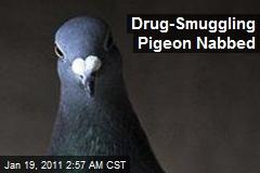 Drug-Smuggling Pigeon Nabbed